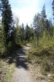 De lente bosweg Royalty-vrije Stock Fotografie