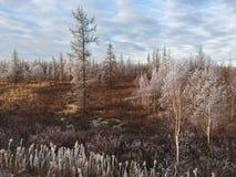 De lente brengt ons de herfst in de afstand royalty-vrije stock foto