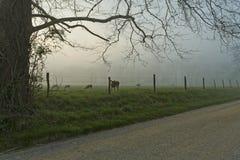 De lente, Cades-Inham, Grote Rokerige Mtns NP stock afbeelding
