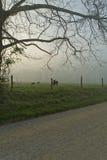 De lente, Cades-Inham, Grote Rokerige Mtns NP stock afbeeldingen
