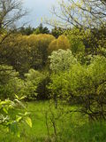 De lente in Centraal Rusland Royalty-vrije Stock Foto