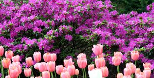 De lente in Central Park Stock Foto