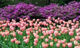 De lente in Central Park Stock Afbeelding