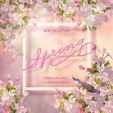 De lente Cherry Blossom Royalty-vrije Stock Foto's