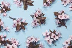 De lente Cherry Blossom stock foto