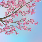 De lente Cherry Sakura Background Royalty-vrije Stock Foto