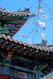 De lente in Chinese Tuin royalty-vrije stock foto's