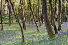 De lente in Cornwall royalty-vrije stock foto