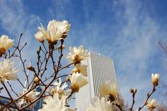 De lente in de stad Stock Fotografie