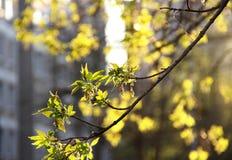 De lente in de stad Royalty-vrije Stock Fotografie