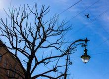 De lente in de Stad Stock Afbeelding