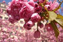 De lente in de stad Stock Afbeeldingen