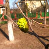 De lente in de stad van Odessa stock fotografie