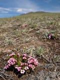 De lente in de steppe Royalty-vrije Stock Afbeeldingen