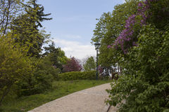 De lente in de Tsjechische Republiek royalty-vrije stock foto