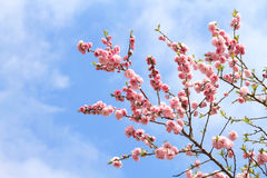 De lente in de tuin Stock Afbeeldingen