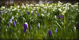 De lente in de Tuin Royalty-vrije Stock Fotografie