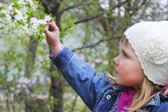 De lente in de tuin een klein meisje die een kersentak houden. Stock Foto's