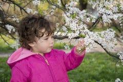 De lente in de tuin een klein meisje die een kersentak houden. Royalty-vrije Stock Foto's