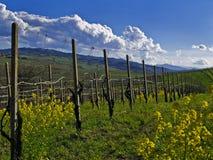 De lente in de wijngaard Royalty-vrije Stock Foto