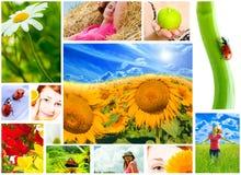De lente, de zomer Royalty-vrije Stock Fotografie