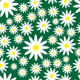 De lente of de zomer naadloos patroon met madeliefjes Stock Fotografie