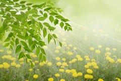De lente of de zomer zonnige dag op de bos, abstracte achtergronden stock foto