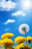 De lente of de zomerbloemenachtergrond van Art Beautiful Royalty-vrije Stock Foto's