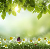 De lente of de zomerhitte abstracte .chamomile bloem