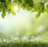 De lente of de zomerhittesamenvatting Royalty-vrije Stock Foto's
