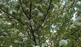 De lente Deeya royalty-vrije stock afbeelding