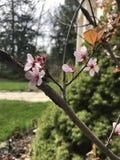 De lente is definitief onder ons Stock Afbeeldingen