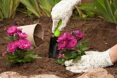 De lente die Bloemen bij de Bloembloei planten Royalty-vrije Stock Foto's