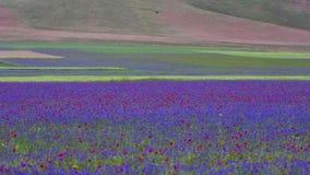De lente die in Casrelluccio bloeien stock videobeelden