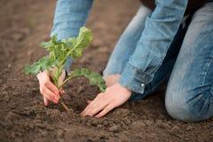 De lente die op het gebied vrouwelijke agronoomhanden planten royalty-vrije stock foto's