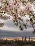 De lente die op Madrid vallen Royalty-vrije Stock Fotografie