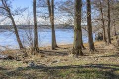 De lente door het meer Stock Fotografie