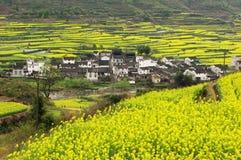 De lente in dorp Royalty-vrije Stock Afbeelding