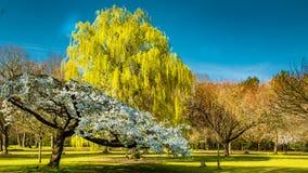 De lente in een Engelse parkland stock fotografie
