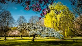 De lente in een Engelse parkland stock afbeeldingen