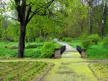De lente in een park Stock Afbeeldingen