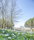 De lente in een park royalty-vrije stock foto