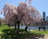 De lente in een stad royalty-vrije stock foto