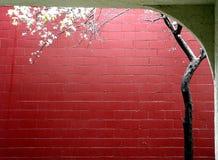 De lente in een stad Royalty-vrije Stock Afbeelding