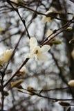 De lente, de eerste bloeiende bomen stock fotografie