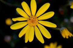 De lente en bloemen Royalty-vrije Stock Foto's
