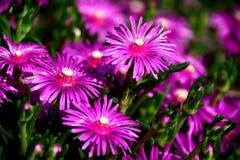 De lente en bloemen Royalty-vrije Stock Afbeeldingen