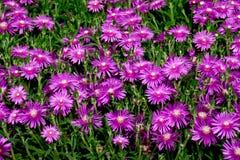 De lente en bloemen Royalty-vrije Stock Afbeelding