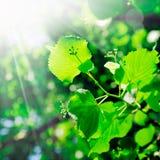De lente en de nieuwe groei stock foto