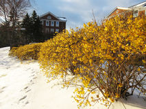 De lente en de winter Royalty-vrije Stock Afbeelding